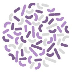 Probiotyk czyli żywe kultury bakterii Lactobacillus acidophilus