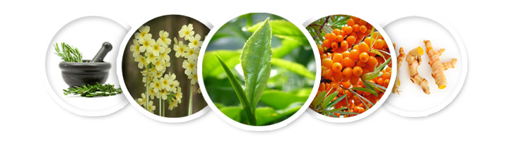 Składniki kremu CRX: zielona herbata, pierwiosnek lekarski, imbir, rozmaryn, rokitnik zwyczajny
