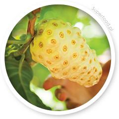 Rosnący owoc noni