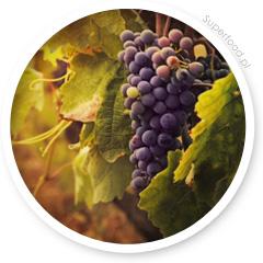 Resweratrol - ekstrakt z czerwonych winogron